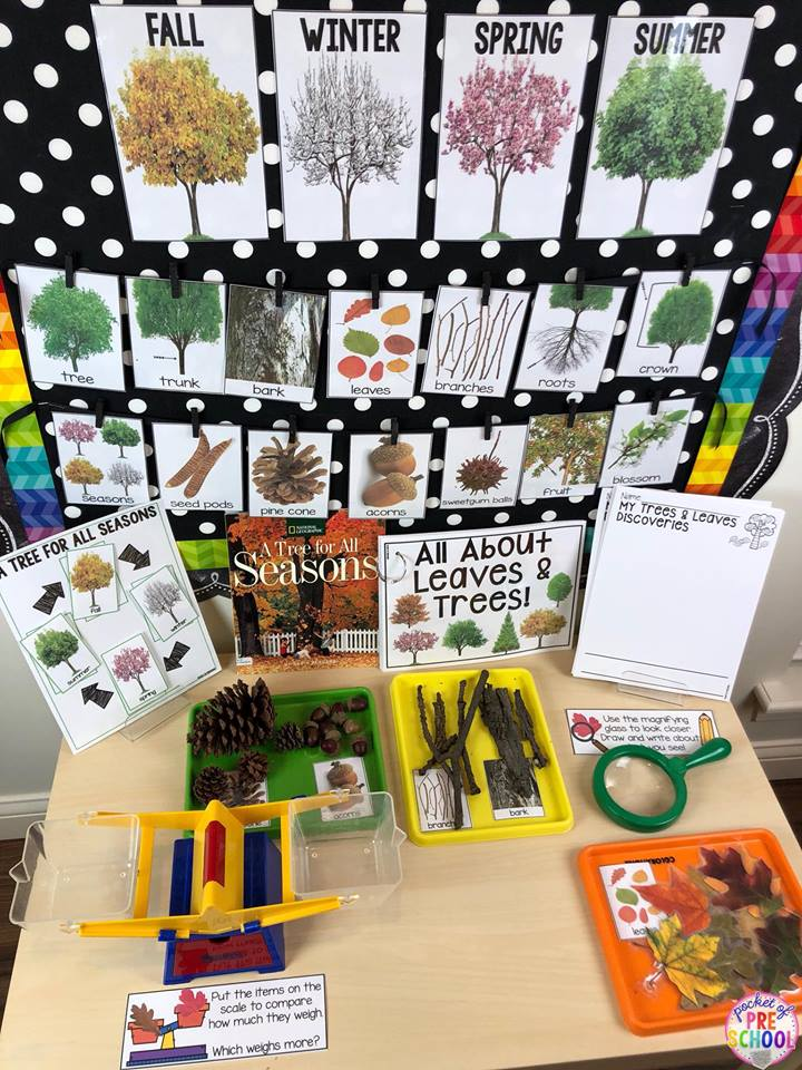 Fall leaves, trees, and seasons science table for preschool, pre-k, and kindergarten! Perfect for a tree study or a leaves study.