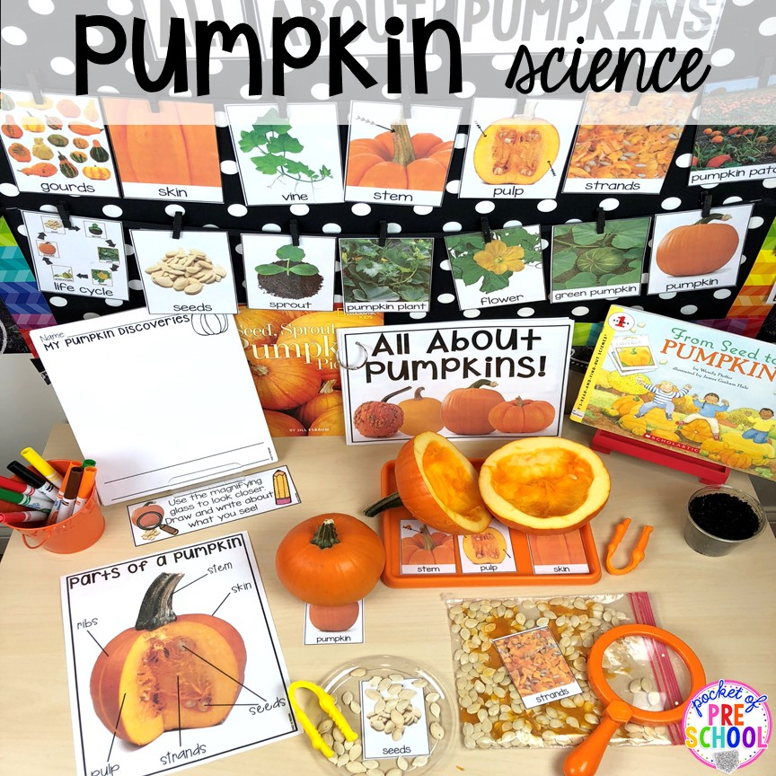 Pumpkin science! Explore in the parts and life cycle of a pumpkin with preschool, pre-k, and kindergarten kiddos. Perfect for fall or Halloween.