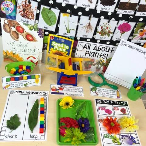 All About Plants science unit for preschool, pre-k, and kindergarten! Hands on learning experiences for spring.