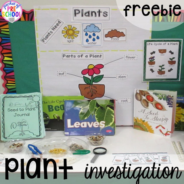 Plant Needs and Life Cycle Posters FREEBIE. Prefect for a spring theme in preschool, pre-k, and kindergarten.