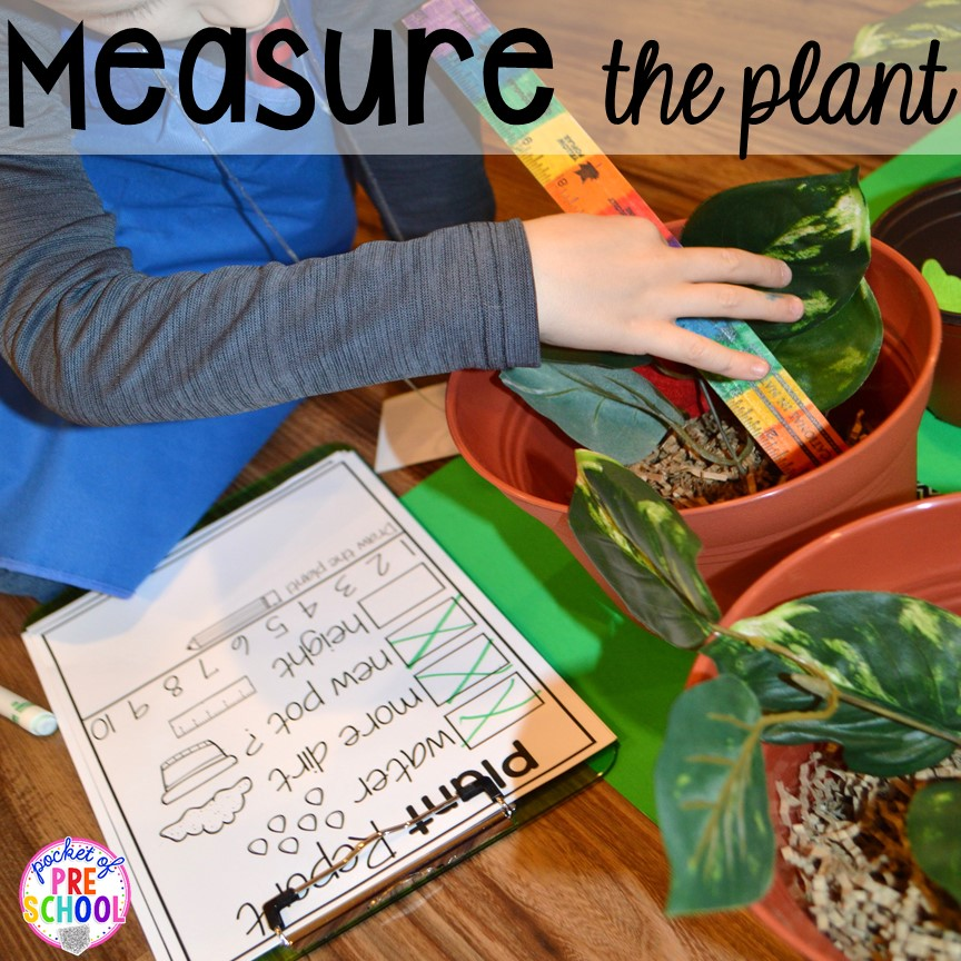 Measure the plants in the Garden Shop Dramatic Play for a spring theme, Mother's Day theme, or summer theme when everything is growing and blooming. Any preschool, pre=k, and kindergarten kiddos will LOVE it (and learn a ton too). #flowershop #gardenshop #presschool #prek #dramaticplay