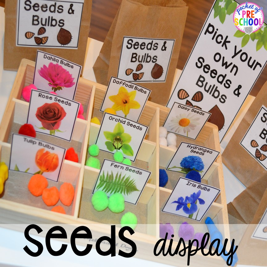 Seed display in our Garden Shop Dramatic Play for a spring theme, Mother's Day theme, or summer theme when everything is growing and blooming. Any preschool, pre=k, and kindergarten kiddos will LOVE it (and learn a ton too). #flowershop #gardenshop #presschool #prek #dramaticplay