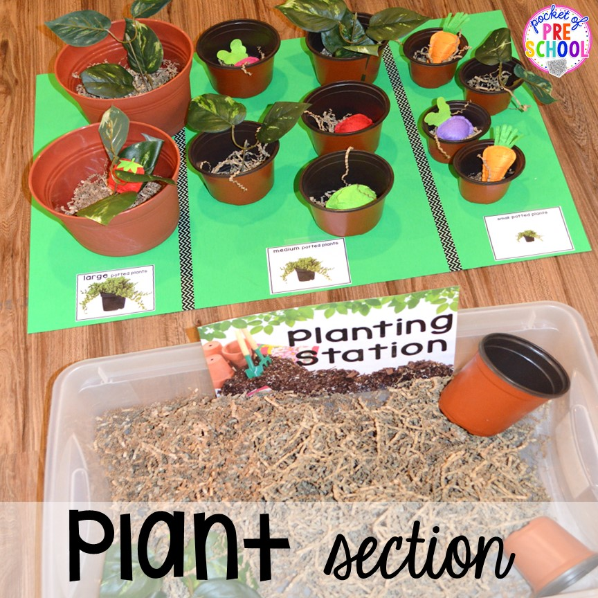 Plant section in our Garden Shop Dramatic Play for a spring theme, Mother's Day theme, or summer theme when everything is growing and blooming. Any preschool, pre=k, and kindergarten kiddos will LOVE it (and learn a ton too). #flowershop #gardenshop #presschool #prek #dramaticplay