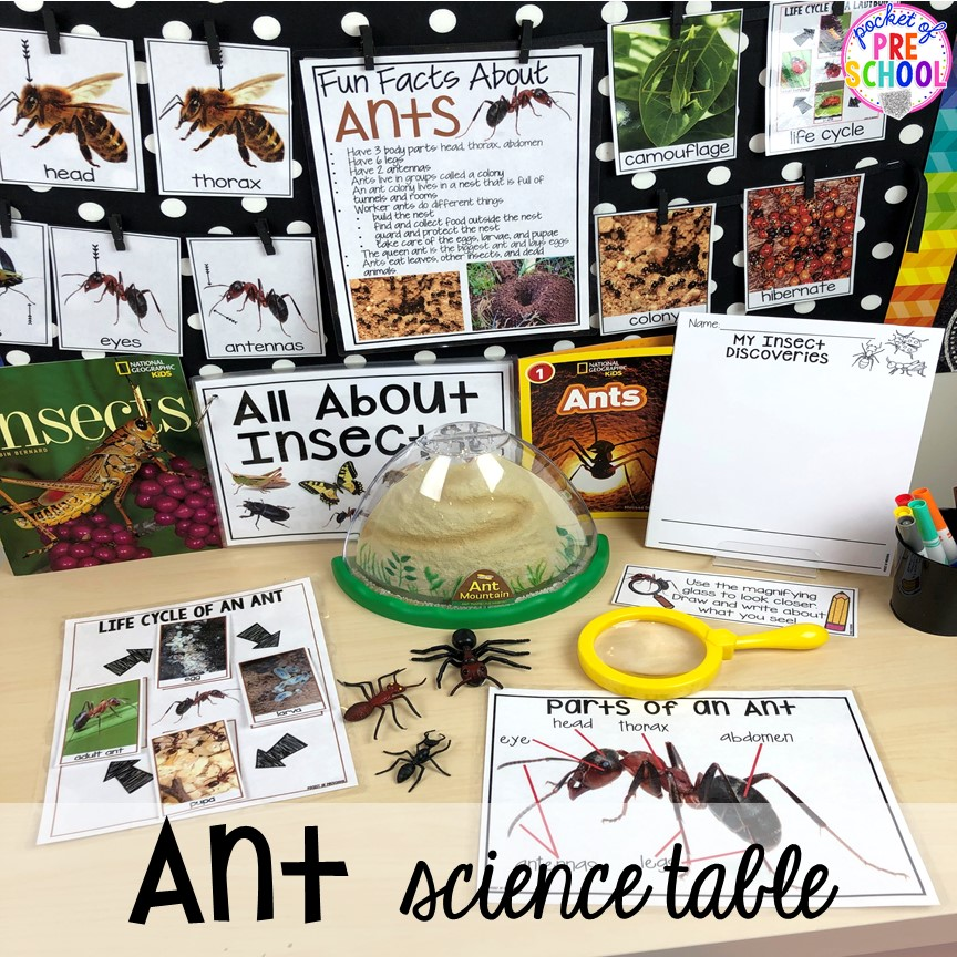 Ant science table! Bug themed activities and centers for preschool, and kindergarten (freebies too)! Perfect for spring, summer, or fall! #bugtheme #insecttheme #preschool #prek #kindergarten