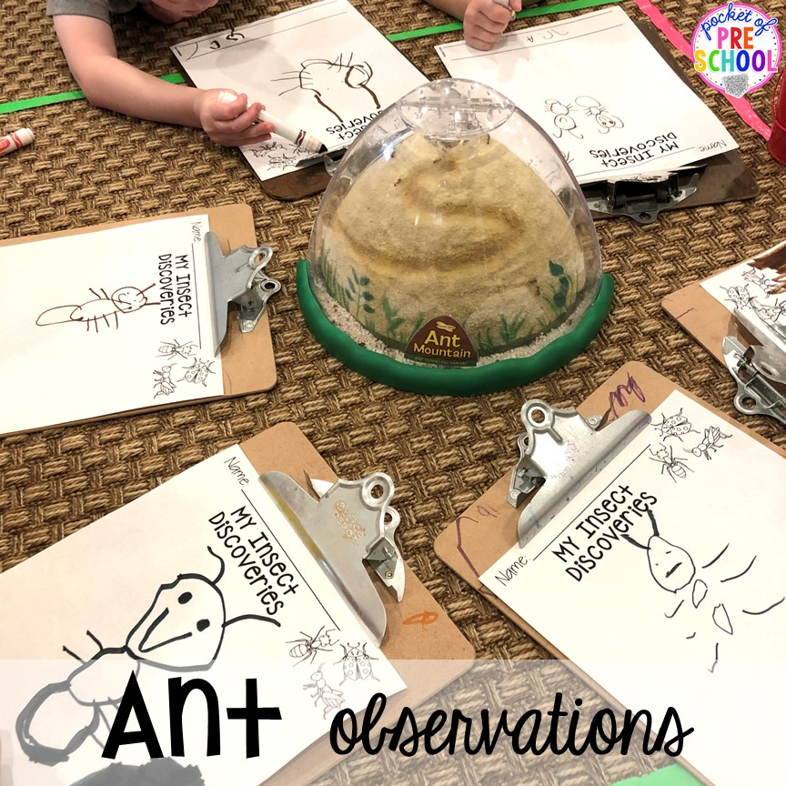 Ant observation! Bug themed activities and centers for preschool, and kindergarten (freebies too)! Perfect for spring, summer, or fall! #bugtheme #insecttheme #preschool #prek #kindergarten