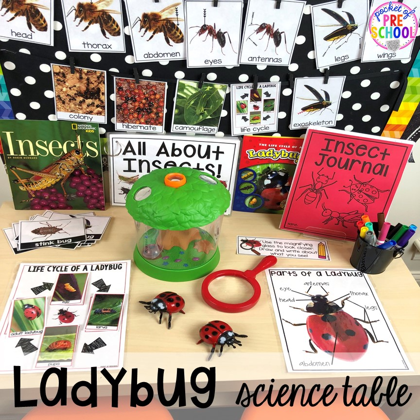 Ladybug science table! Bug themed activities and centers for preschool, and kindergarten (freebies too)! Perfect for spring, summer, or fall! #bugtheme #insecttheme #preschool #prek #kindergarten