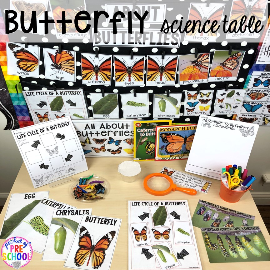 Butterfly science table! Bug themed activities and centers for preschool, and kindergarten (freebies too)! Perfect for spring, summer, or fall! #bugtheme #insecttheme #preschool #prek #kindergarten