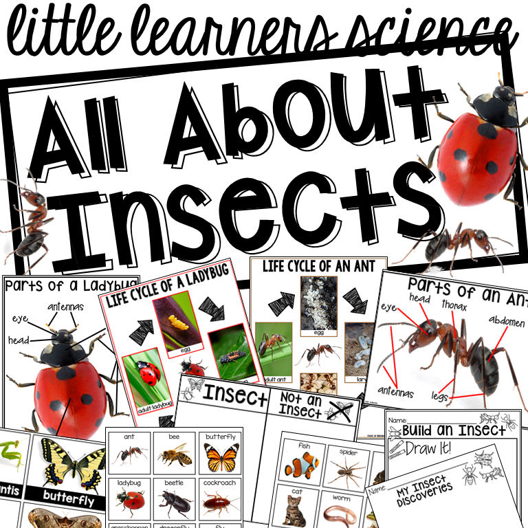 All About Insects Science unit for preshcool, pre-k, and kindergarten.