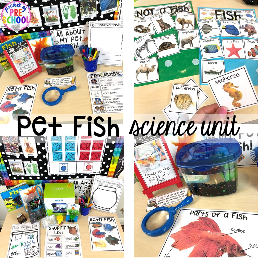 Pet fish science unit for preschool, pre-k, and kindergarten #preschoolscience #sciencecenter #prekscience #kindergartenscience