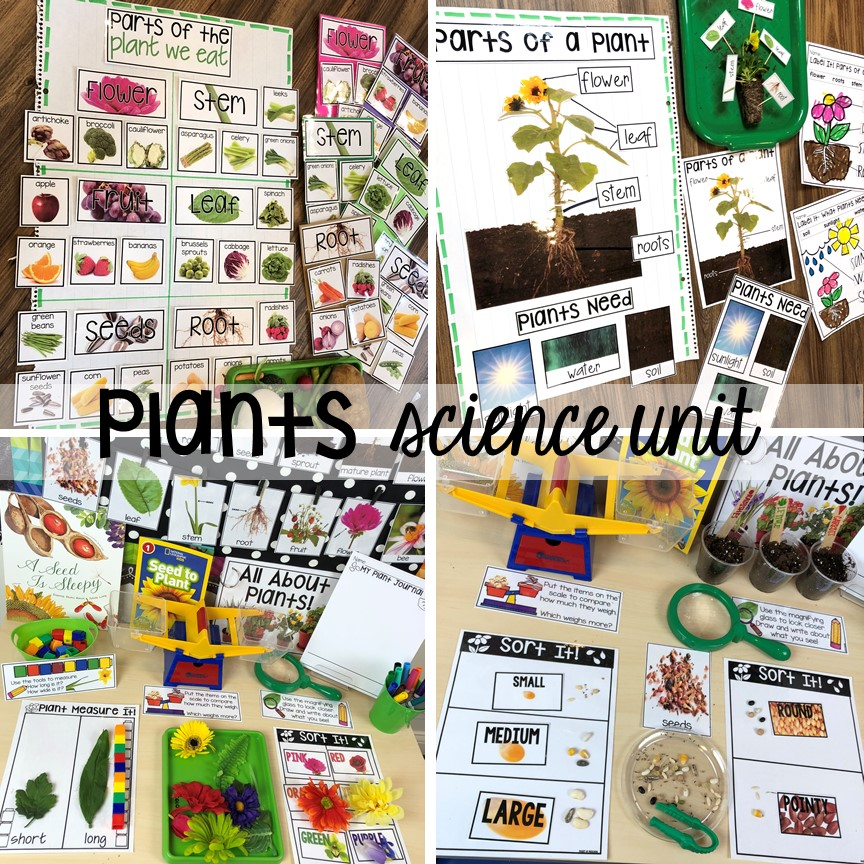 Plants science unit for preschool, pre-k, and kindergarten #preschoolscience #sciencecenter #prekscience #kindergartenscience