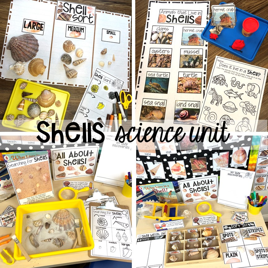 Shells science unit for preschool, pre-k, and kindergarten #preschoolscience #sciencecenter #prekscience #kindergartenscience