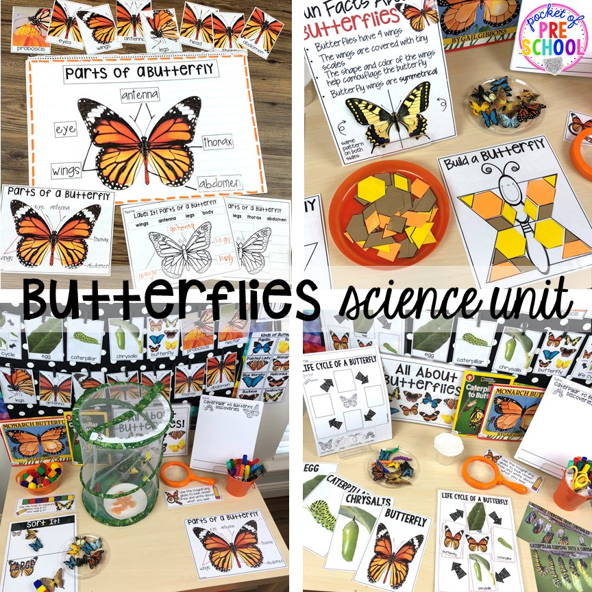 Butterflies science unit for preschool, pre-k, and kindergarten #preschoolscience #sciencecenter #prekscience #kindergartenscience