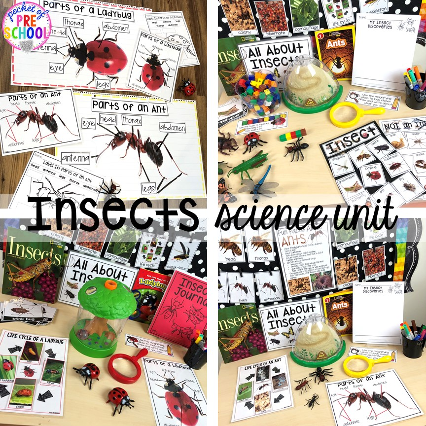 Insects science unit (with a focus on ants or ladybugs) for preschool, pre-k, and kindergarten #preschoolscience #sciencecenter #prekscience #kindergartenscience