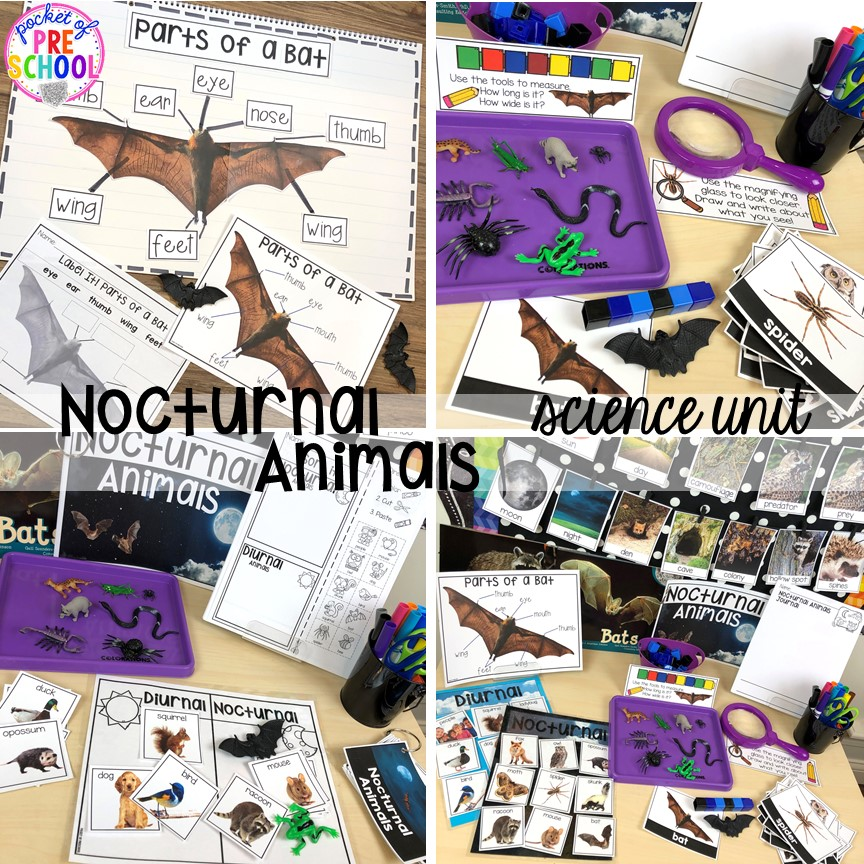 Nocturnal animals science unit (focus on bats) fun for Halloween for preschool, pre-k, and kindergarten #preschoolscience #sciencecenter #prekscience #kindergartenscience