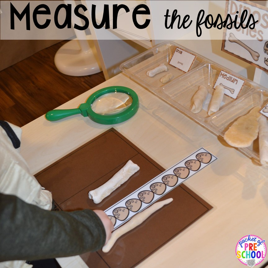 Measure the fossils! ow to make a Dinosaur Dig Site in dramatic play and embed tons of math, literacy, and STEM into their play. Perfect for preschool, pre-k, and kindergarten. #preschool #prek #dinosaurtheme #dinodig #dramaticplay
